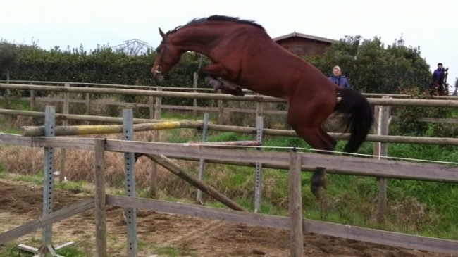 Jumping horse breeding Broodmare foals